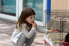 Obiadowy ` s czas dla królika zdjęcie stock