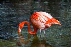 obiadowy target4151_0_ flaminga Obrazy Stock