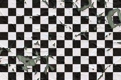 Obieranie malująca sprawdzać tekstura Fotografia Royalty Free