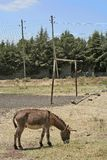 Obiettivo e doney, Etiopia fotografie stock