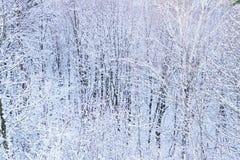 objętych śnieżni drzewa obraz stock