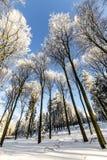 objętych śnieżni drzewa Fotografia Royalty Free