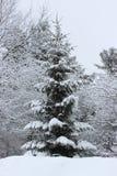 objętych śnieżni drzewa Zdjęcie Stock
