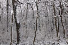 objętych śnieżni drzewa obrazy stock