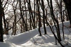 objętych fundergrowth śnieg obrazy stock