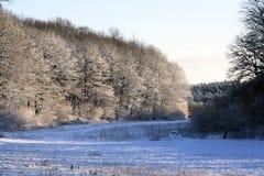 objętych leśny śnieg Zdjęcia Royalty Free