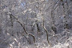 objętych leśny śnieg Obraz Royalty Free