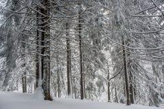 objętych leśny śnieg Zdjęcia Stock