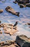 objętych iguazu Fotografia Royalty Free