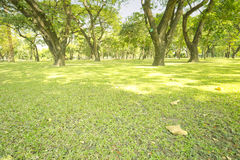 Object. Lawn with green grass and big trees in the park Royalty Free Stock Images
