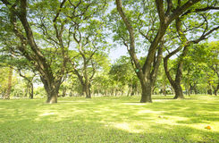 Object. Lawn with green grass and big trees in the park Stock Photos
