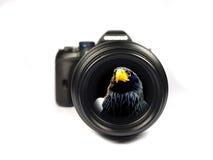 Objectif magique Photographie stock