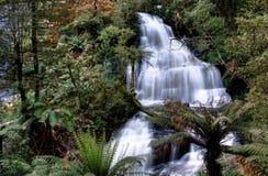 A objectiva tripla cai, parque de estado de Otway, Austrália Imagens de Stock