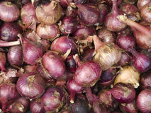 Objects - Red Onion Background Royalty Free Stock Images