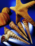 Objects from the Sea - Shells, Starfish, Urchin Royalty Free Stock Images