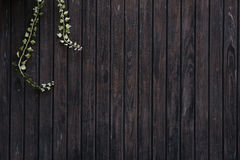 Objects: Wooden Background with brown grunge texture and Ivy twi Royalty Free Stock Image