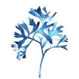 Objekt för havsväxthavsliv som isoleras på vit bakgrund Dragen målad illustration för vattenfärg hand Undervattens- vattenfärg royaltyfri illustrationer