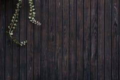 Objekt: Träbakgrund med brun grungetextur och murgrönatwi Royaltyfri Bild