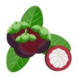 Objet d'illustration de vecteur de mangoustan Nourriture saine Photo libre de droits