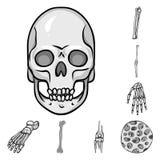 Objet d'isolement de biologie et de symbole médical Collection de biologie et d'icône squelettique de vecteur pour des actions illustration libre de droits