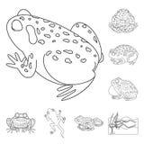 Objet d'isolement de signe amphibie et animal Collection de symbole boursier d'amphibie et de nature pour le Web illustration stock