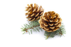 Objet du pin Cones Photographie stock libre de droits