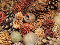 Objet du pin Cones Photo stock
