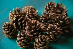 Objet du pin Cones Texture de cônes de pin Fond de cônes de pin Images libres de droits