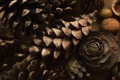 Objet du pin Cones Texture de cônes de pin Fond de cônes de pin pin d'isolement par cône proche de fond vers le haut de blanc Fon Image libre de droits