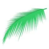 Objet en feuille de palmier de vecteur Photo stock