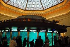 Objet exposé des Caraïbes de récif à l'aquarium de bouclier, Chicago Photos libres de droits