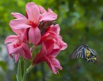 Objetivo de la mariposa Fotografía de archivo