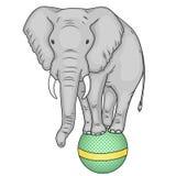 Objeto aislado en el fondo blanco Un elefante del circo se coloca en una bola La imitación del estilo cómico Vector Fotos de archivo libres de regalías