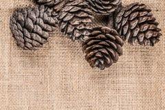 Objeto del pino Cones Fotos de archivo libres de regalías