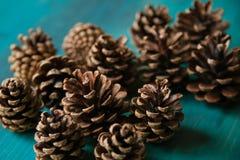 Objeto del pino Cones Textura de los conos del pino Fondo de los conos del pino Fotos de archivo libres de regalías