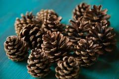 Objeto del pino Cones Textura de los conos del pino Fondo de los conos del pino Imágenes de archivo libres de regalías