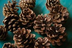 Objeto del pino Cones Textura de los conos del pino Fondo de los conos del pino Fotografía de archivo libre de regalías