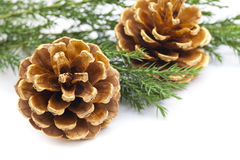 Objeto do pinho Cones Imagem de Stock Royalty Free
