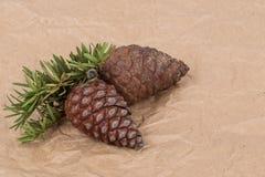 Objeto do pinho Cones Imagens de Stock