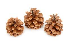 Objeto do pinho Cones Imagens de Stock Royalty Free