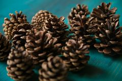 Objeto do pinho Cones Textura dos cones do pinho Fundo dos cones do pinho Fotos de Stock