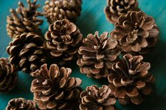 Objeto do pinho Cones Textura dos cones do pinho Fundo dos cones do pinho Fotografia de Stock Royalty Free