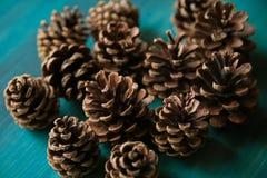 Objeto do pinho Cones Textura dos cones do pinho Fundo dos cones do pinho Imagem de Stock