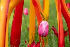 Objeto expuesto del artista de cristal Dale Chihuly entre los tulipanes en hierba larga en los jardines Reino Unido de Kew La ins fotos de archivo libres de regalías