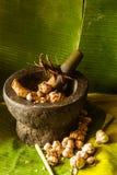 Objeto vegetal de la comida y de la herramienta de la cocina Fotografía de archivo