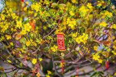 Objetos afortunados lunares de la decoración del Año Nuevo las palabras significan recuerdos y la buena suerte por el Año Nuevo v Imágenes de archivo libres de regalías