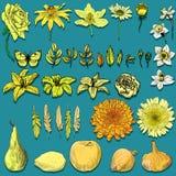 Objetos amarillos de la naturaleza Fotos de archivo libres de regalías