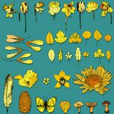 Objetos amarillos de la naturaleza Imágenes de archivo libres de regalías
