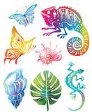 Objetos coloreados de la naturaleza Fotografía de archivo