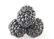 Objetos da fruta da amora-preta isolados Fotos de Stock Royalty Free
